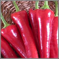 Сладкий перец сорт «Каскад»