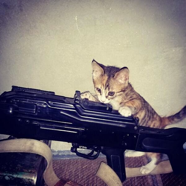 http://www.buzzfeed.com/jonstone/foreign-jihadi-fighters-in-iraq-and-syria-keep-tweeting-pict