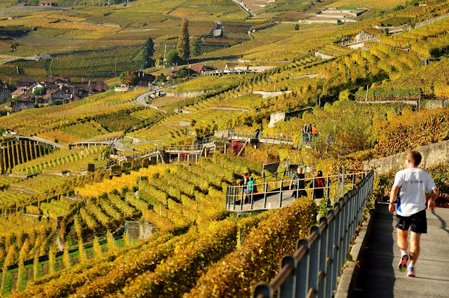walk+through+the+vineyards+vaud+lavaux