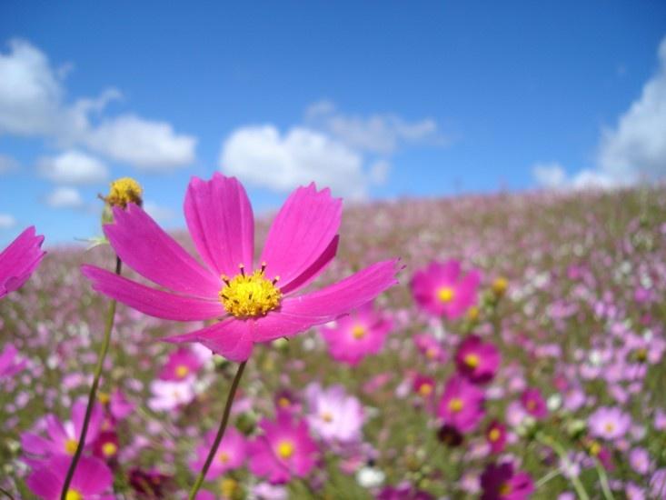 flores no jardim de deus : flores no jardim de deus:Flores Del Campo