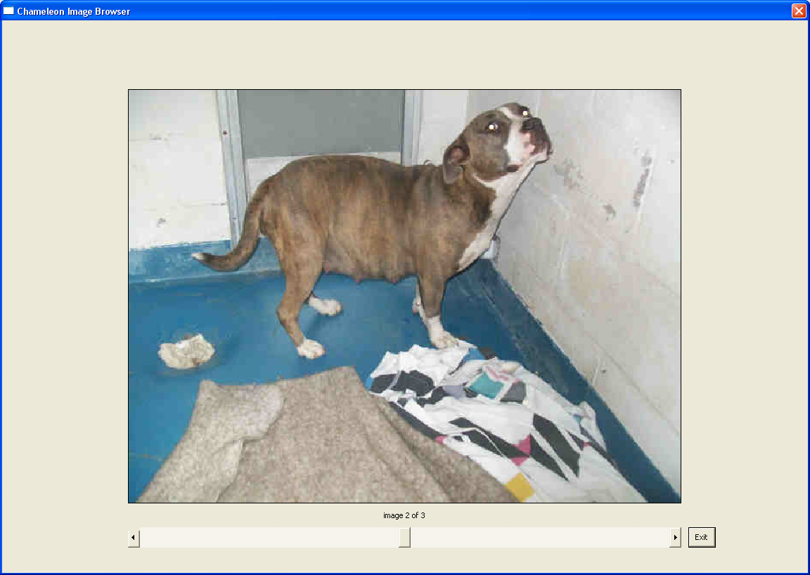 Gainesville Help With Dog Rescue