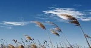 Angin yang Mengawinkan