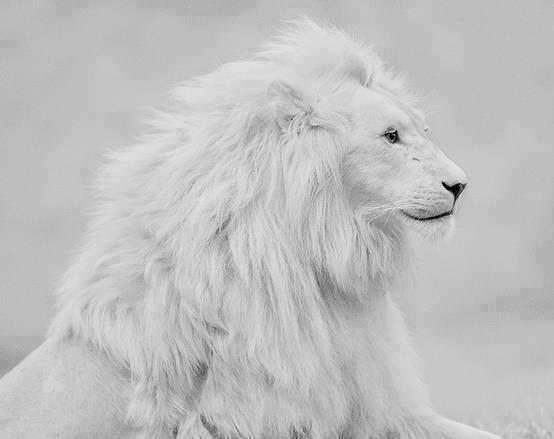 Roar Like A Lion Live Like A Lamb