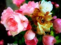 jardín botánico santa catalina- álava-