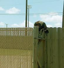 dog training fence william the dog trainer fences and other containment