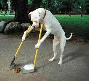 Come educare il cane o un cucciolo