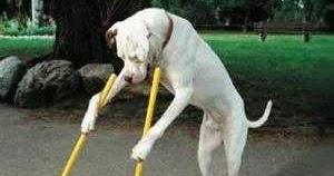 Come educare un cane il blog del salmo 69 - Educare il cane a non salire sul divano ...