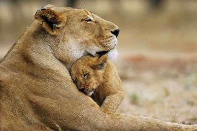 สัตว์ก็รักลูกเหมือนกันนะครับ