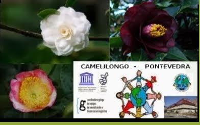Camelilongo