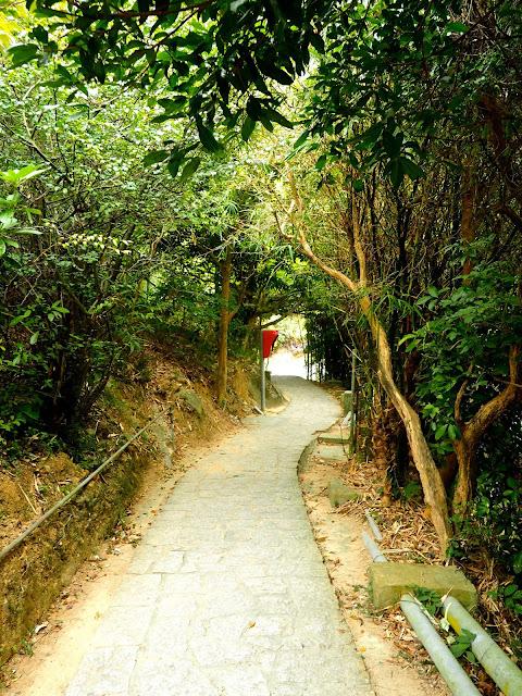 Path through trees on the Family Trail walk, Lamma Island, Hong Kong