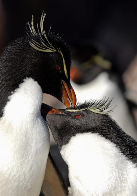 pics of penguins