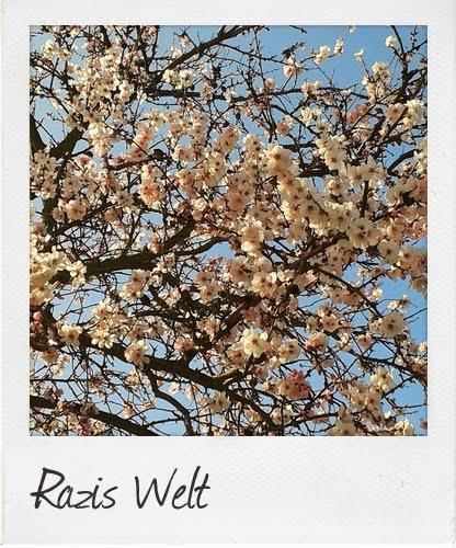 raziswelt © 2014
