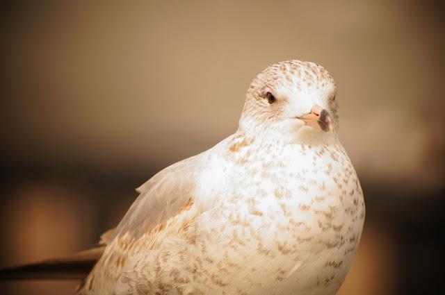 Bird photo free