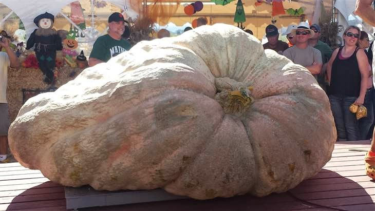 http://www.today.com/food/2-058-lb-pumpkin-squashes-previous-us-records-2D80214088