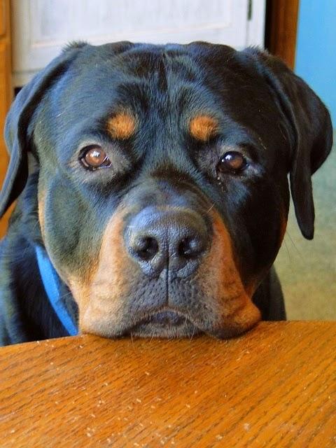 The 5 Most Intelligent Doggies
