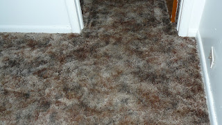 Cooper's Carpet Cleaning Mchenry Illinois