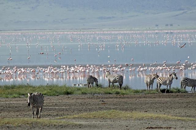 Buy office art of Ngorongoro Crater