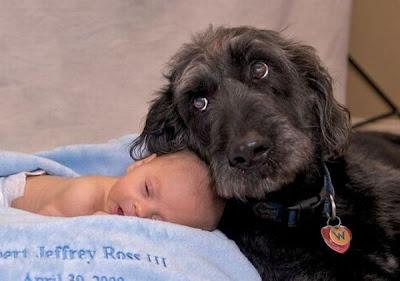 """""""Doggy"""