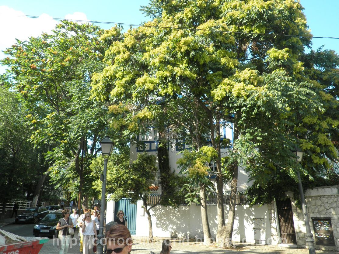 Conocer madrid colonia de el viso iglesia de san agust n for Oficinas ono madrid
