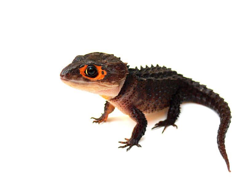 Los diez animales prehistóricos extintos más aterradores  - fotos de animales reptiles