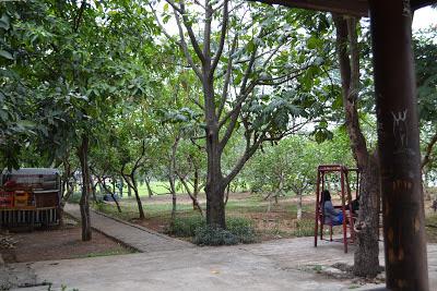 Suasana Taman di Situ Cipondoh