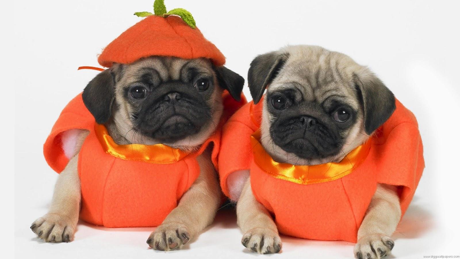 Funny halloween animals 1