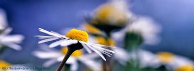 Couverture facebook floue fleur