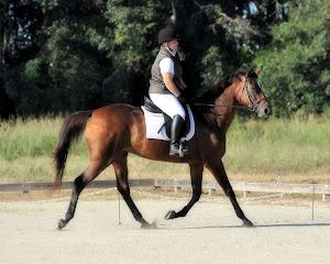 Dressage at Windrift Farm 2012