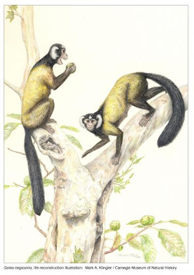 primates prehistoricos del Eoceno Ganlea