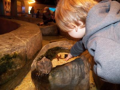Aquarium Picture 5
