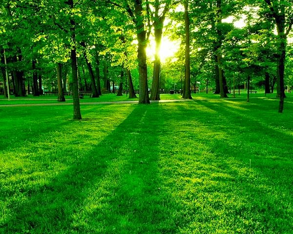 Green forest with light sun.