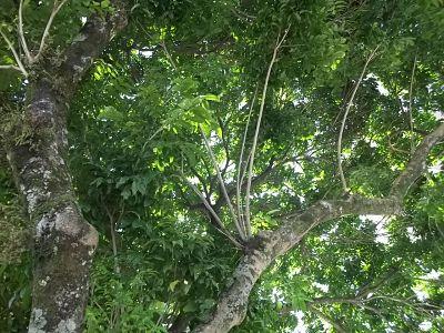 árvores reduzem a erosão do solo e a contaminação das águas