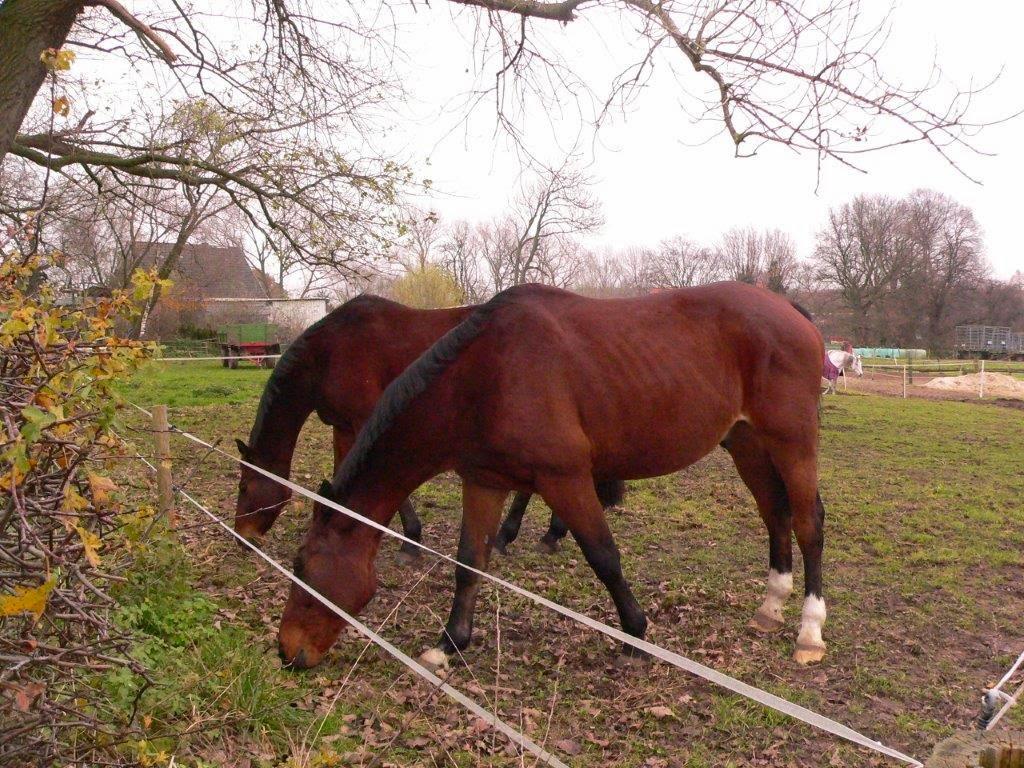 Dortmund Grevel Lanstrop Landmarke Spaziergang Winter Sonntag Feld Dorf Pferd