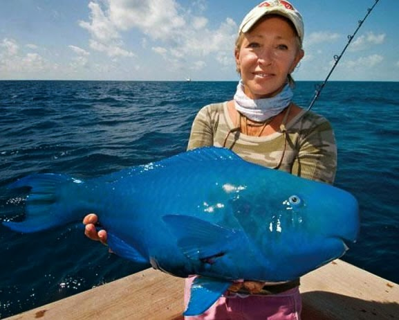 Animals You May Not Have Known Existed - The Blue Parrotfish