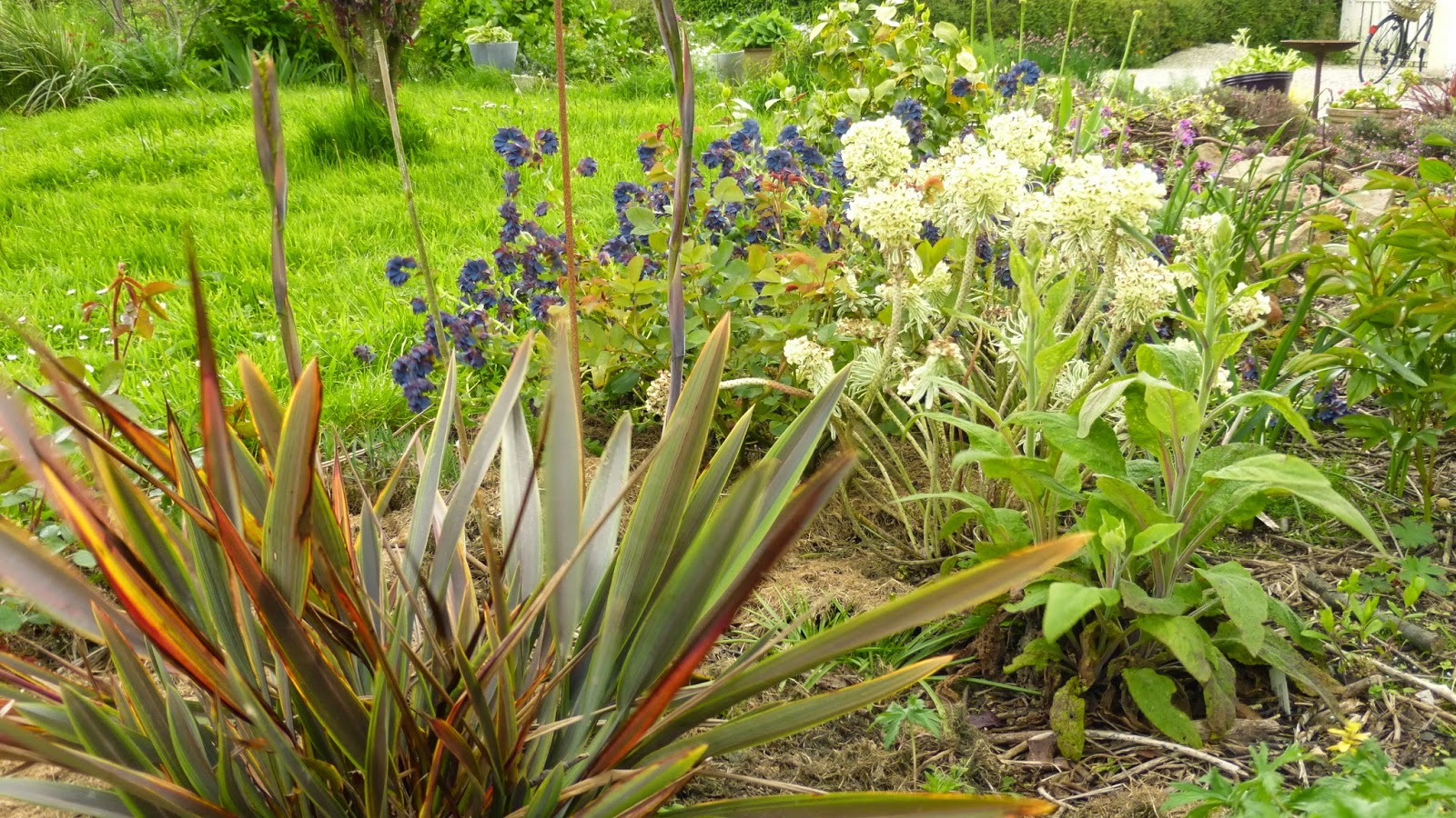Mon jardin entre terre et mer promenade au jardin for Commander des plantes sur internet