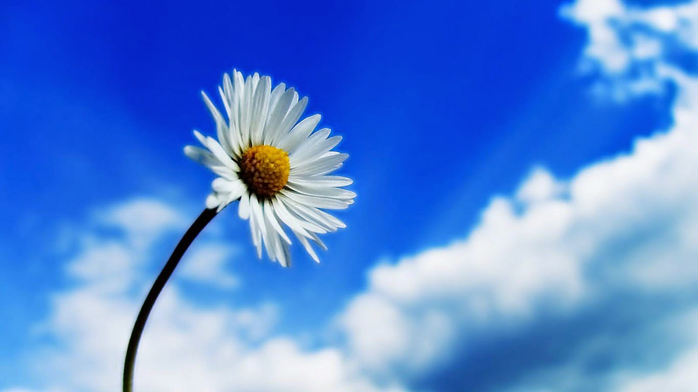 3d Flower blue sky sun flower HD Wallpaper 1366 x 768