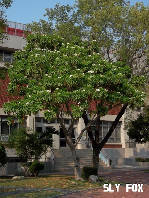 台南公園國小花園小學校
