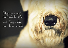 Quotes About Love Dogs : Quotes About Love And Dogs. QuotesGram