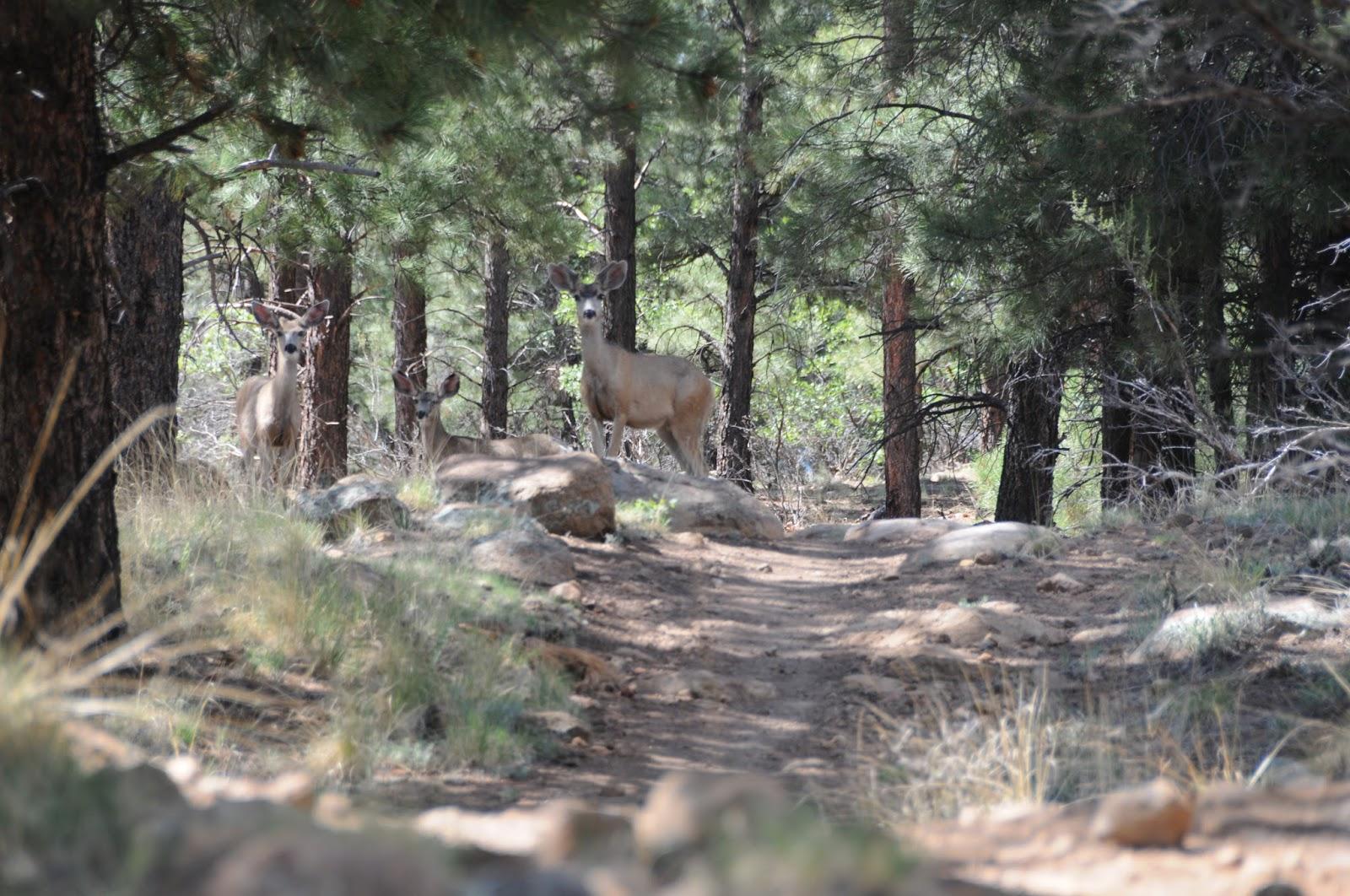 Arizona Hiking: A hike through deer territory