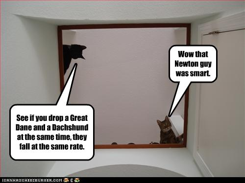 LOLCat - Newton is smart