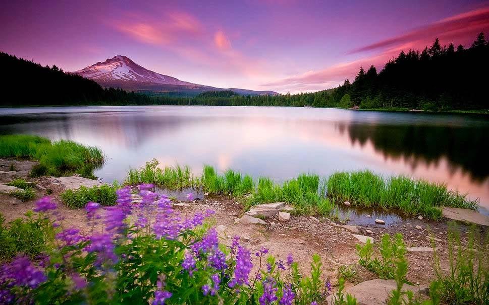 trees-nature-flowers-sunset