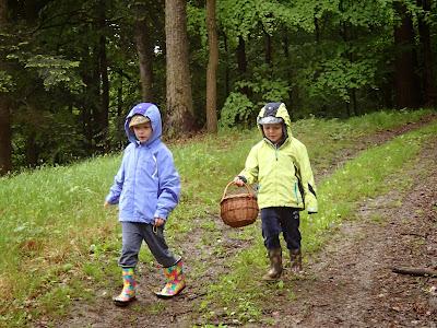 Las Bronaczowa, majowe grzyby