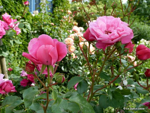 Giverny - maison et jardin de Claude Monet - le clos normand