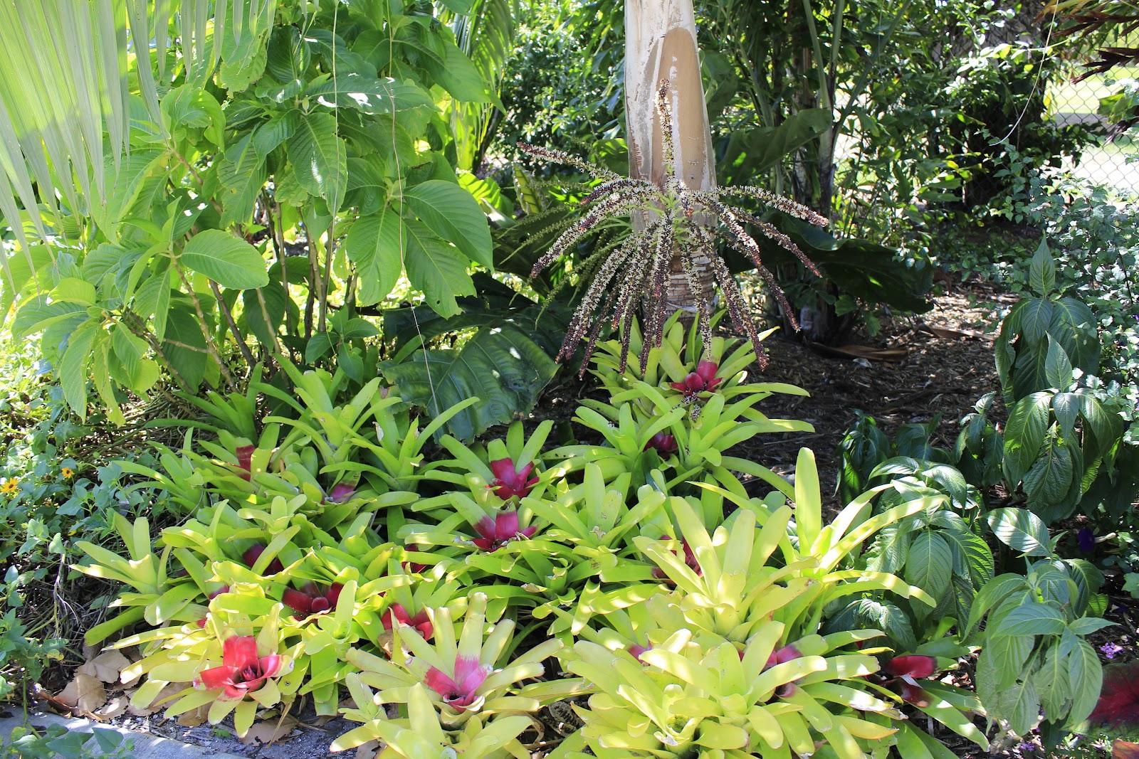 Figs Flowers Food Naples Botanical Gardens Florida