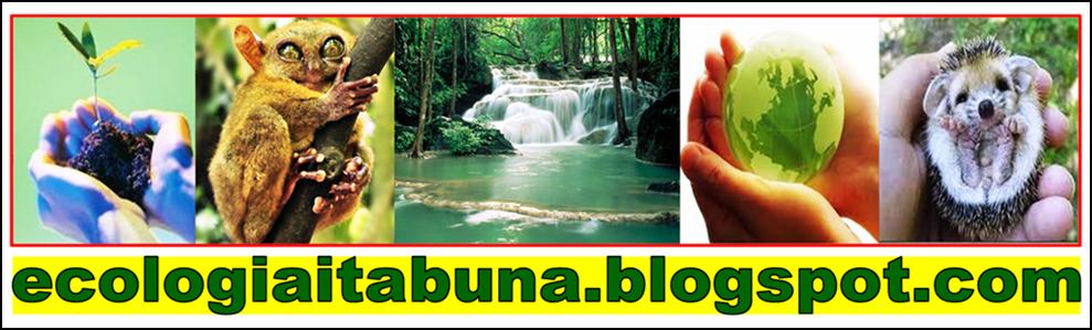 www.ecologiaitabuna.blogspot.com