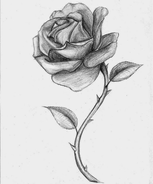 Roses Drawings | Many Flowers