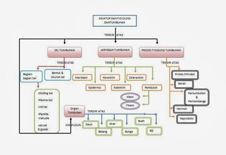 Nimatul laily peta konsep struktur dan fungsi jaringan pada peta konsep struktur dan fungsi jaringan pada tumbuhan dalam mata kuliah media dan teknologi pembelajaran dengandosen pengampu ibu yanti herlanti ccuart Images