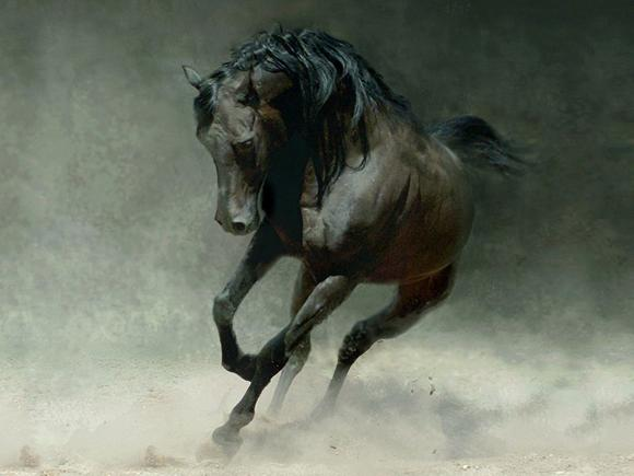 Horse Photo Art Wallpaper 01
