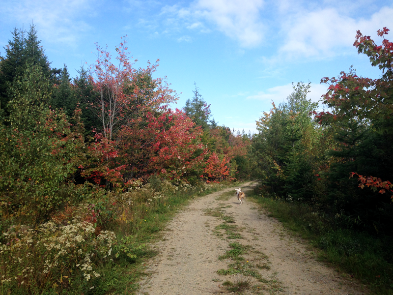 autumn in cape breton
