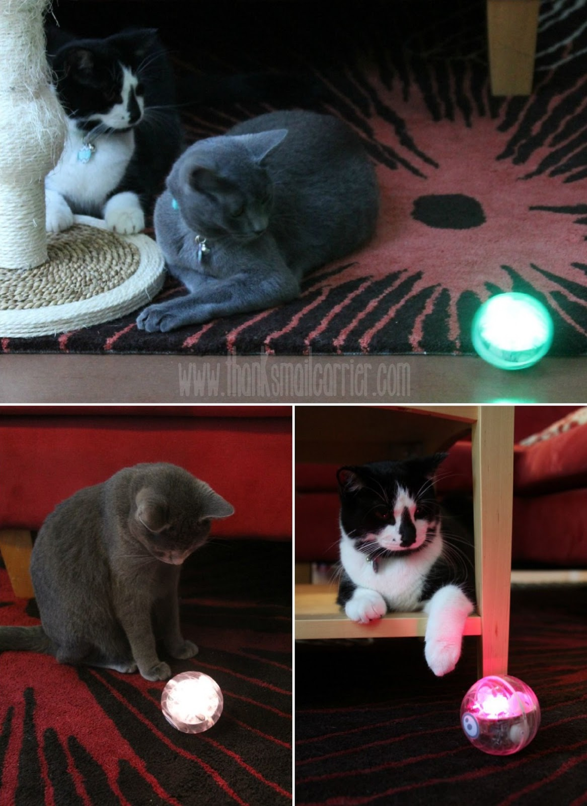Sphero with cats